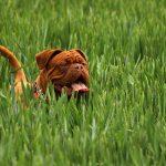 obroża odstraszająca kleszcze u psów