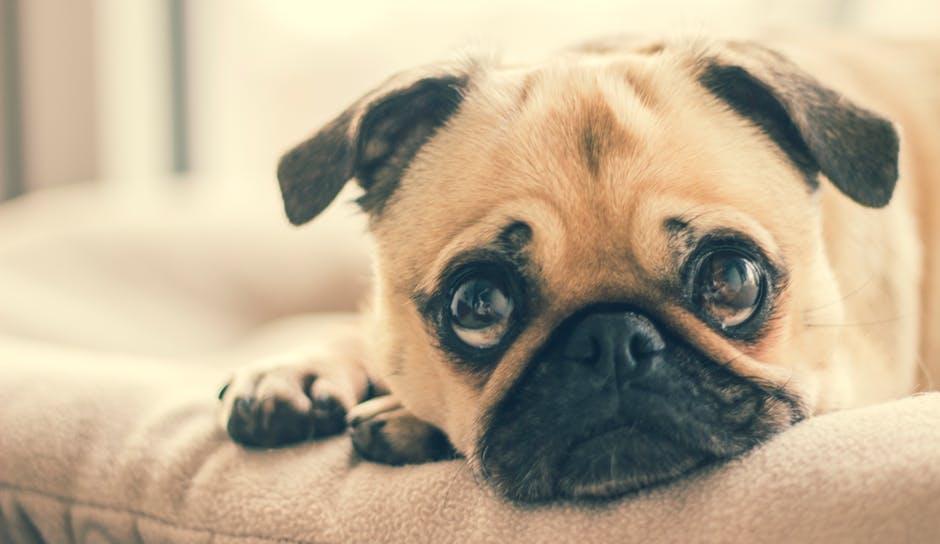 nowoczesna psia mata - dużych rozmiarów