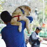 szelki jako alternatywa smyczy dla psa