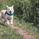 ucieczka psa z domu